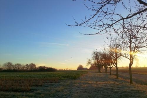 morninglight_s