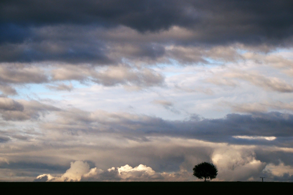 from the archives - 2010-10-23: tree in the clouds