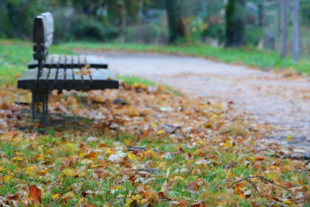 2016-11-14: empty park bench